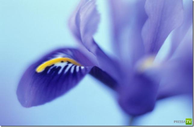 Первые весенние цветочки - первоцветы, хрупкие и нежные