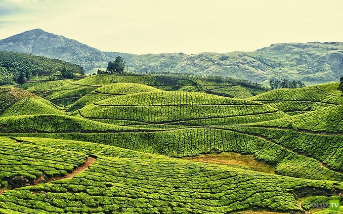 Великолепная Керала (12 фото)