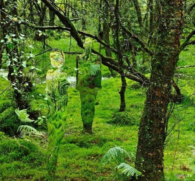 В шотландском лесу живут невидимки (5 фото)