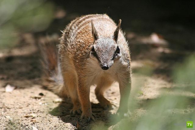 Животный мир Австралии (10 фото)