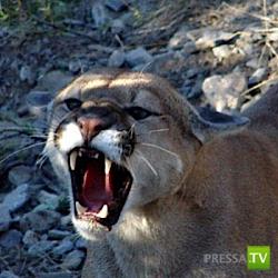 Как отражать нападения животных ... (9 фото)