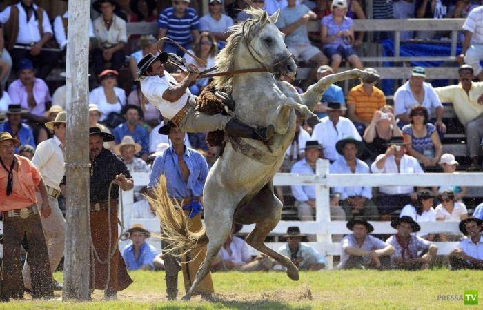 Лошади против людей (20 фото)