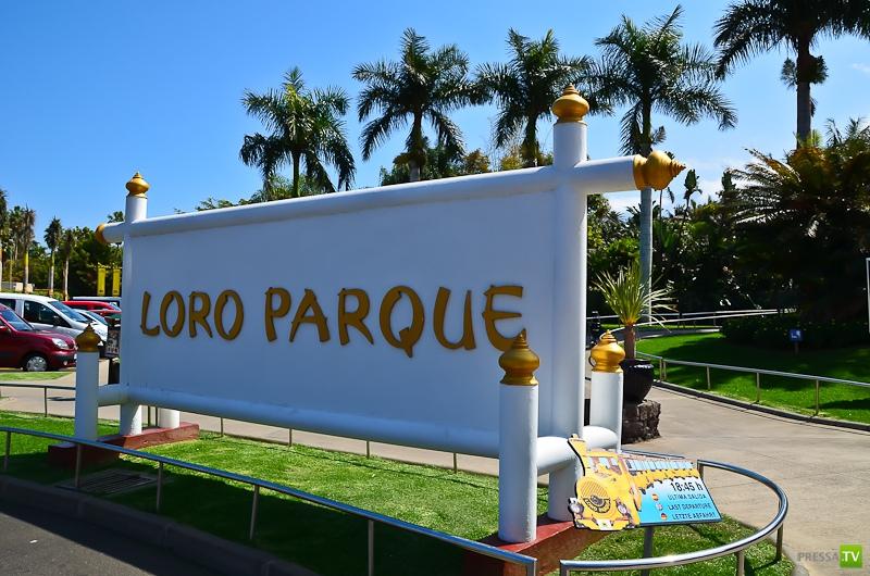 Лоро-Парк на Тенерифе (30 фото)