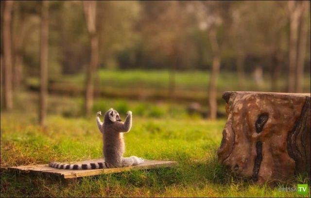 Эти забавные животные (32 фото)
