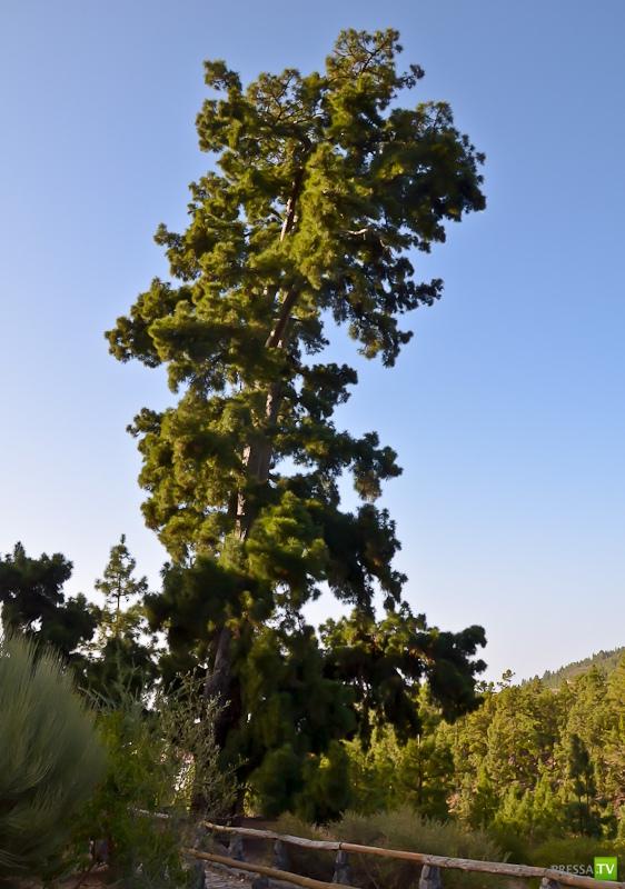 Загадки Тенерифе (7 фото)