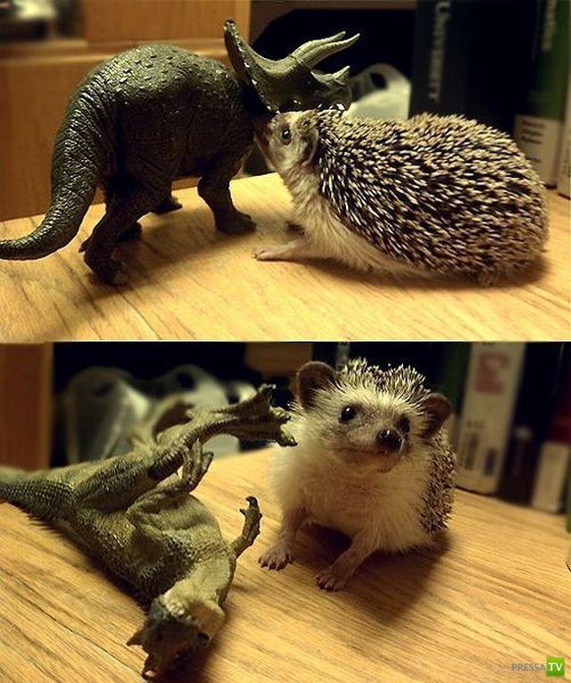 Эти забавные животные (34 фото)