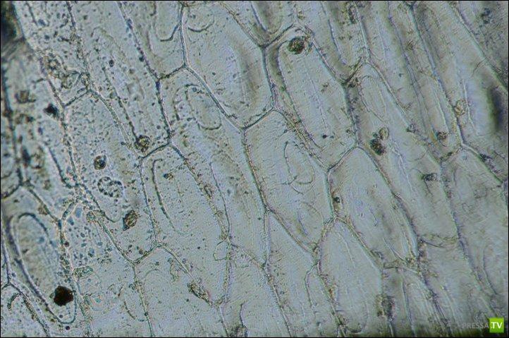 Как сделать микроскоп из фотоаппарата. Практическое пособие (7 фото)