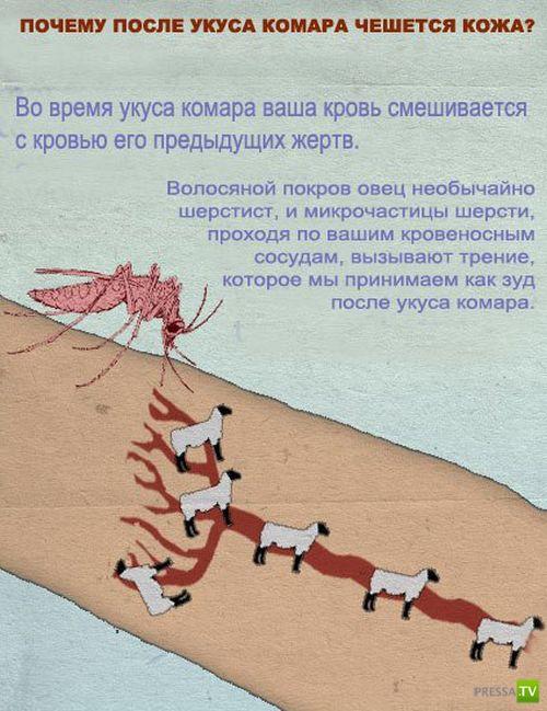 Удивительные факты о природе (9 фото)