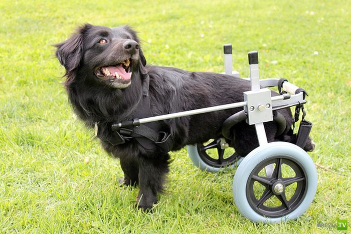 Собаки - инвалиды (21 фото)
