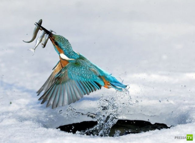 Фотографии животных в нужный момент (23 фото)