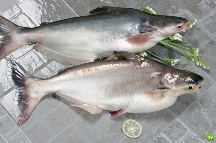 Руководство по морепродуктам: пангасиус (27 фото)