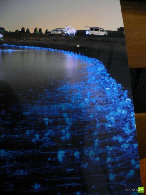 Светящиеся медузы (5 фото)