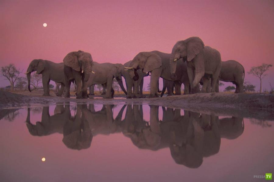 Лучшие 10 фотографий природы 2012