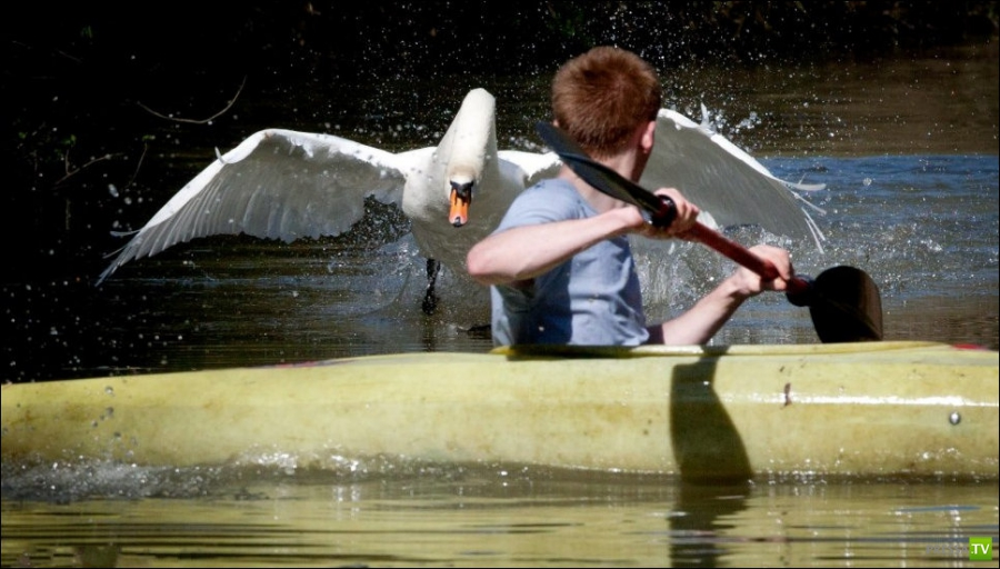 Как думаете, наваляет мужику на каяке? ... (4 фото + видео)