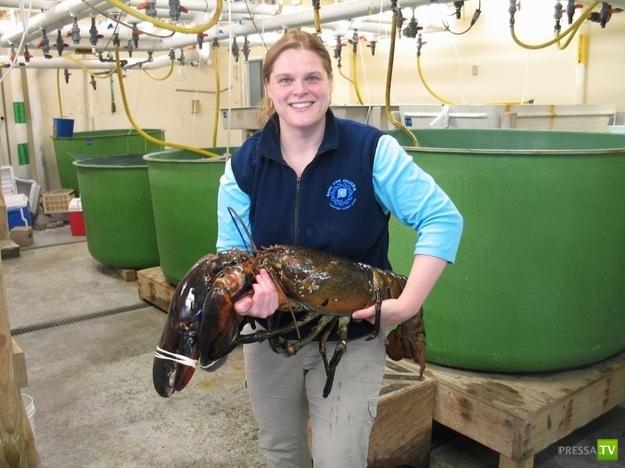 Самые большие уловы ...(11 фото)