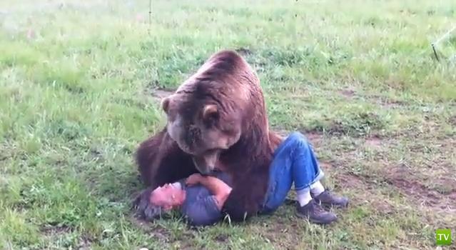 Медвежья любовь (фото + видео)