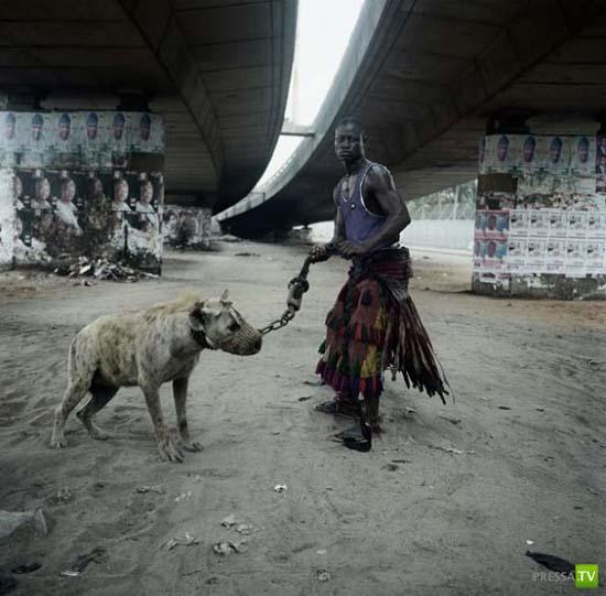 Домашние животные африканцев ... (12 фото)