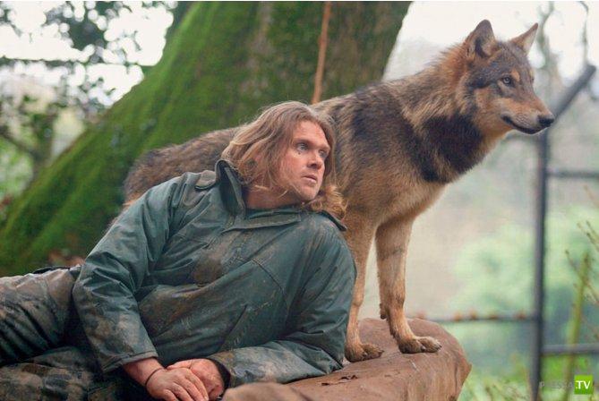 Эксперимент с волками. Маугли по своей воли (6 фото)