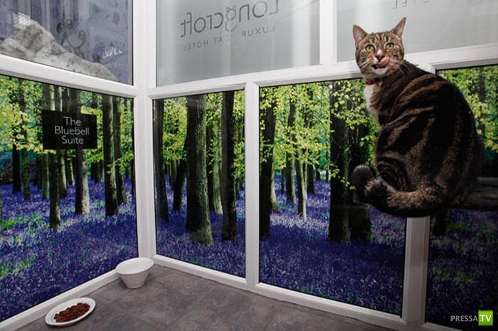 Хорошо быть состоятельным... котом! Отель класса люкс для котов (13 фото)