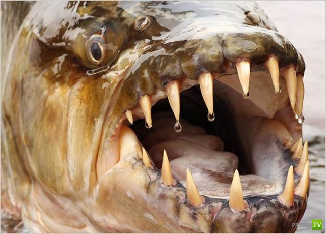Морские и речные чудовища (54 фото)