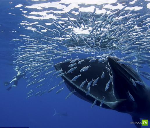 Чуть не попал киту на обед ... (8 фото)