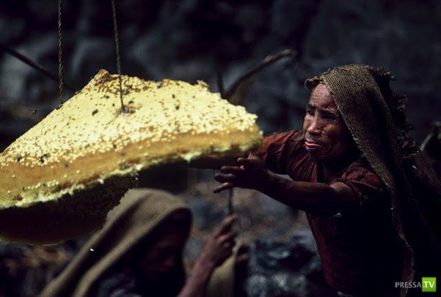Как в Непале собирают мед диких пчел (13 фото)