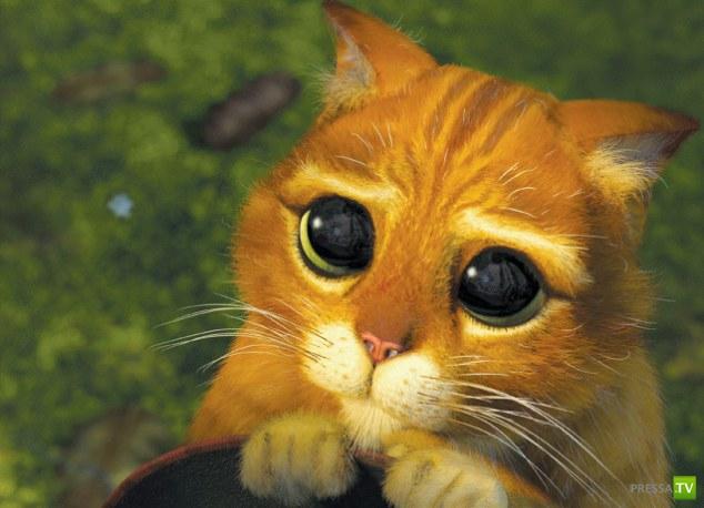 Cамая симпатичная кошка в мире? (5 фото + видео)