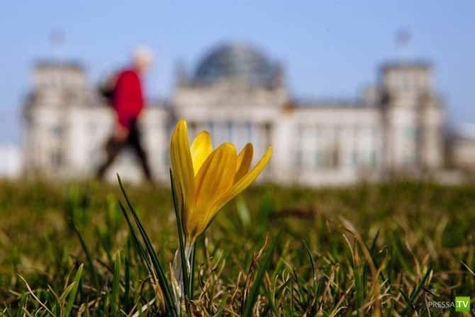 Мир радуется весне (27 фото)