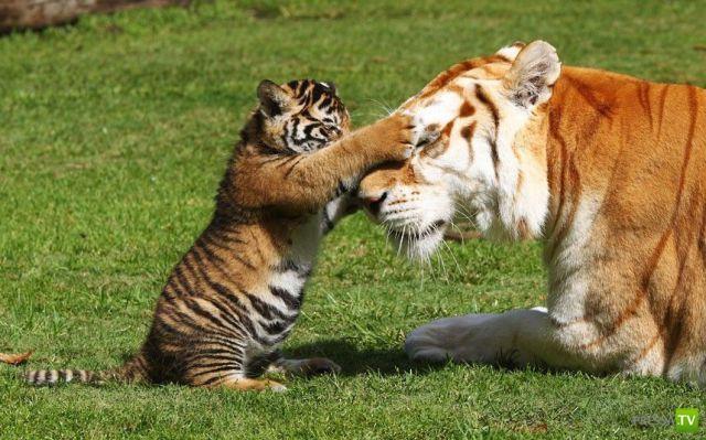 Эти забавные животные (36 фото)