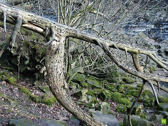 Денежные деревья в Англии (9 фото)