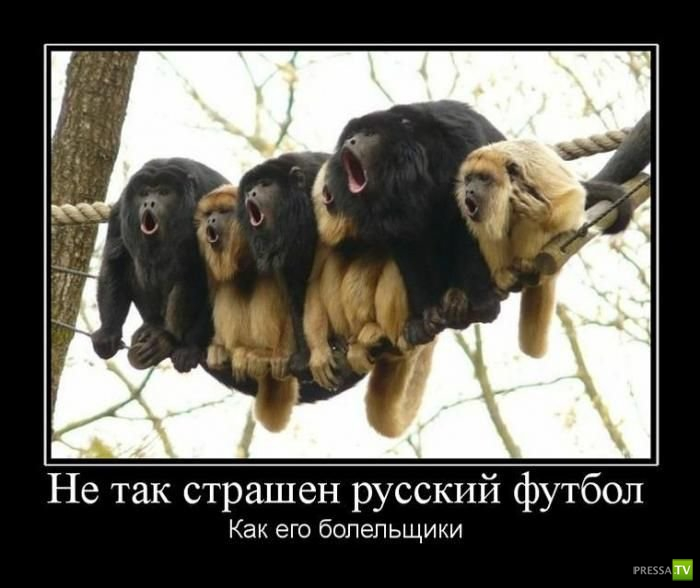 Весенние демотиваторы (21 фото)