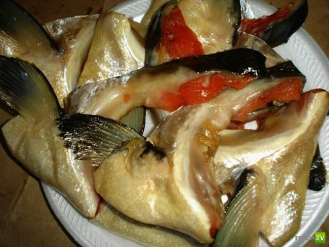 Руководство по морепродуктам: что самое вкусное у сёмги? (12 фото)