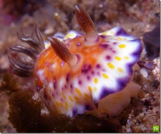 Причудливые обитатели морских глубин (25 фото)