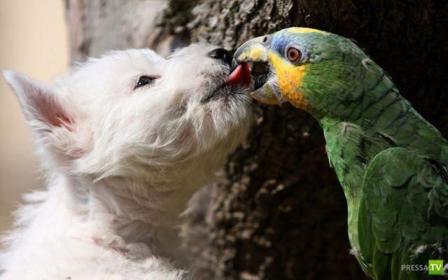 Эти забавные животные (35 фото)
