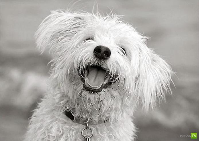 Веселые собачки (15 фото)