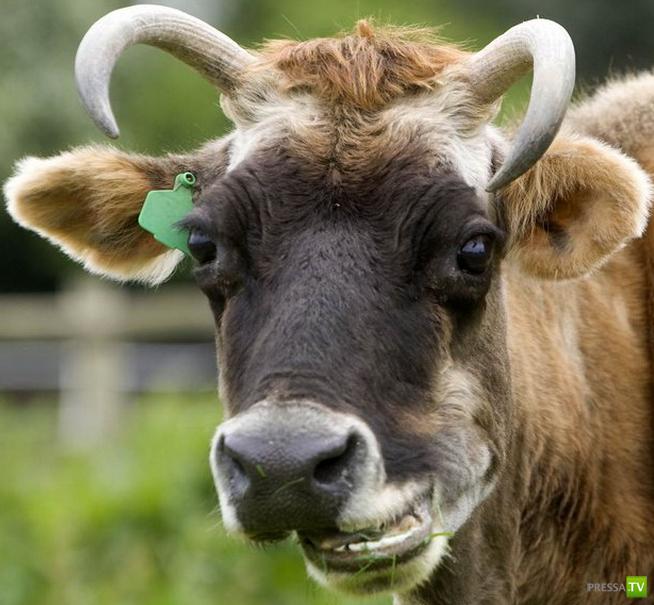 Подборка смеющихся, улыбающихся и радостных животных и птиц от агентства Rex USA (12 фото)