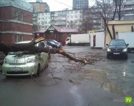 Во Владивостоке дерево упало на машину...