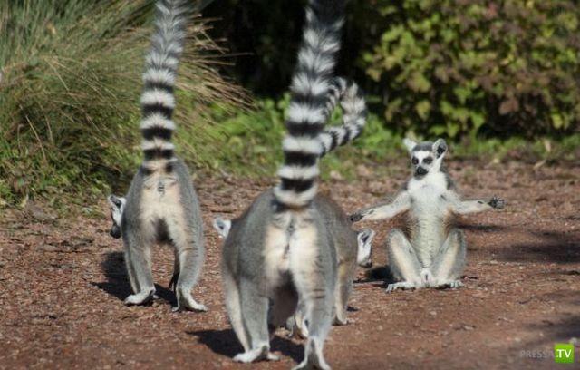 Эти забавные животные (39 фото)