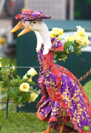 Презентация гусиной моды в австралийском Сиднее (9 фото)