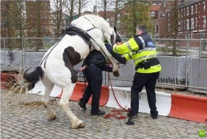 Конь пытался изнасиловать полицейского (3 фото)