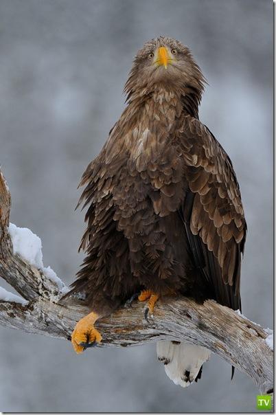 Прикольные птички (18 фото)