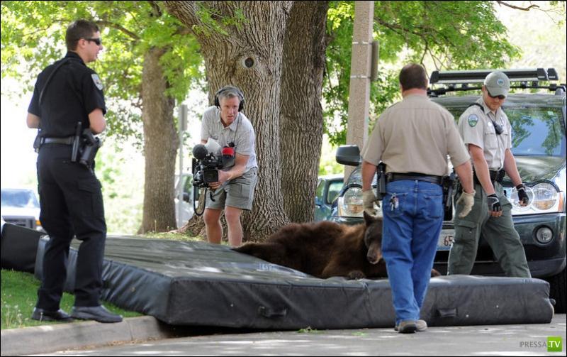 Колорадский университет посетил медведь (4 фото)