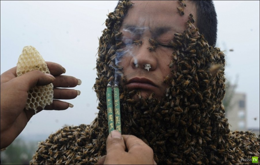 Костюм из пчел (3 фото)
