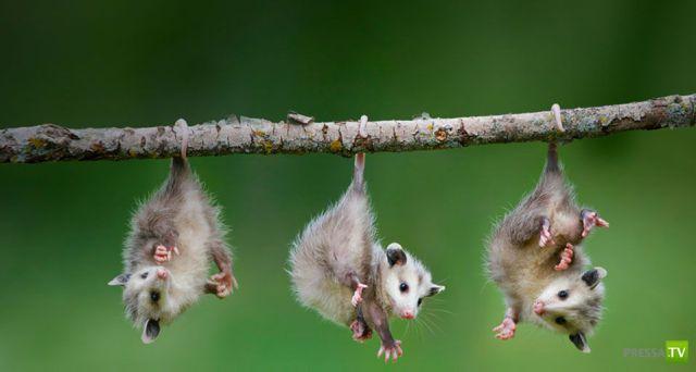 Эти забавные животные (42 фото)