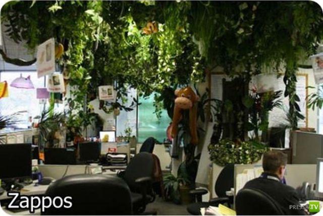 Самые необычные офисы (16 фото)