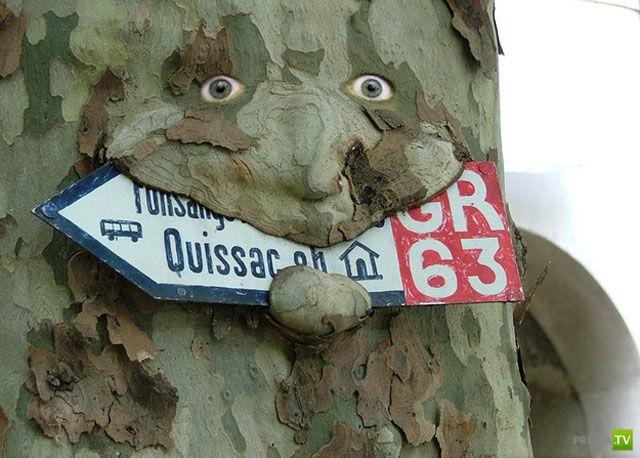 Деревья поглащают все... (20 фото)