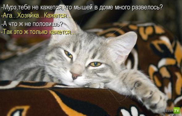 Котоматрица (12 фото)