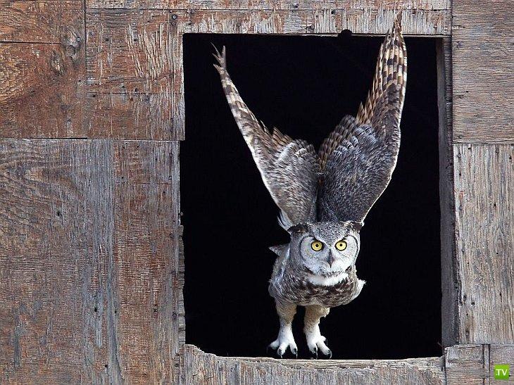 Лучшие фотографии апреля от журнала National Geographic и National Geographic Россия(10 фото)