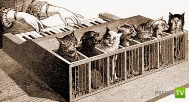 Кошачий клавесин - самый изуверский музыкальный инструмент