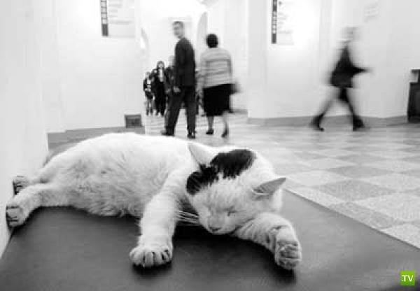 Коты - сотрудники Эрмитажа (14 фото)